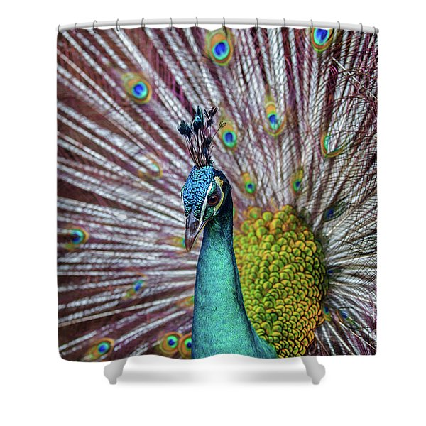 Dancing Indian Peacock  Shower Curtain