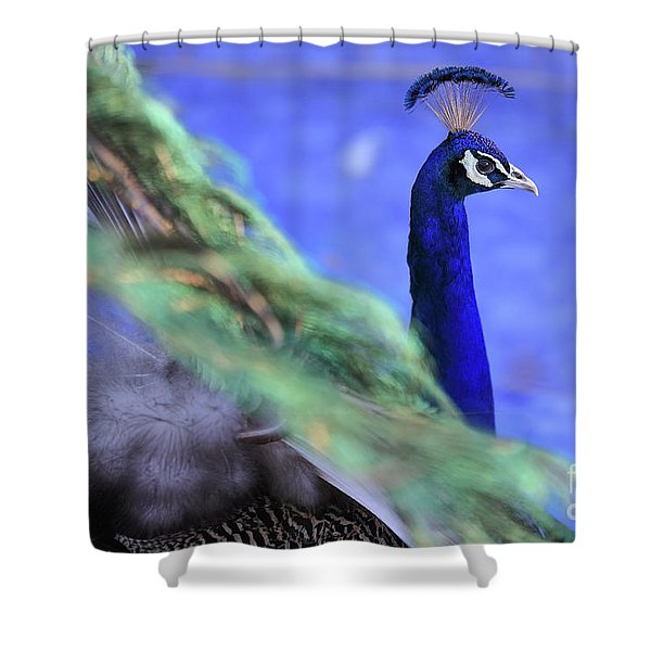 Dancing Peacock Shower Curtain