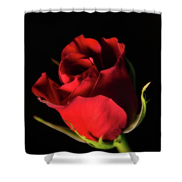 Dark Rose Shower Curtain