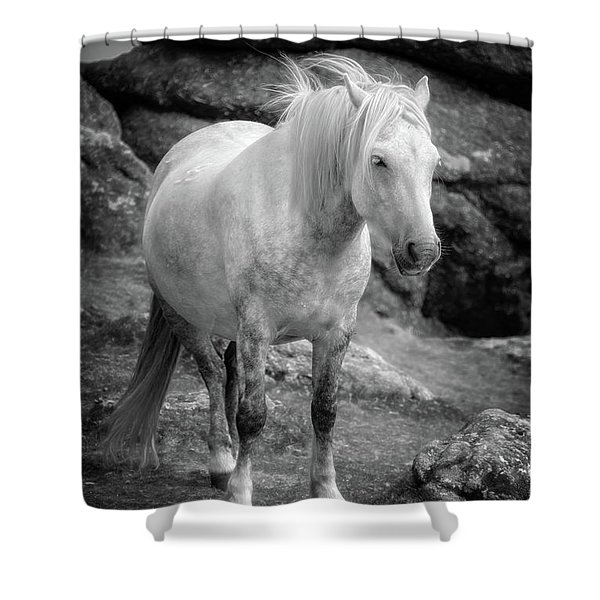 Dartmoor Pony, Black And White Shower Curtain