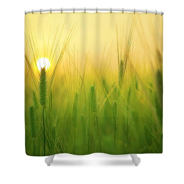 Dawn At The Wheat Field Shower Curtain