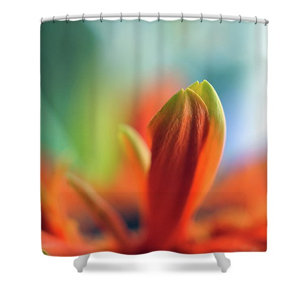 Decision Shower Curtain