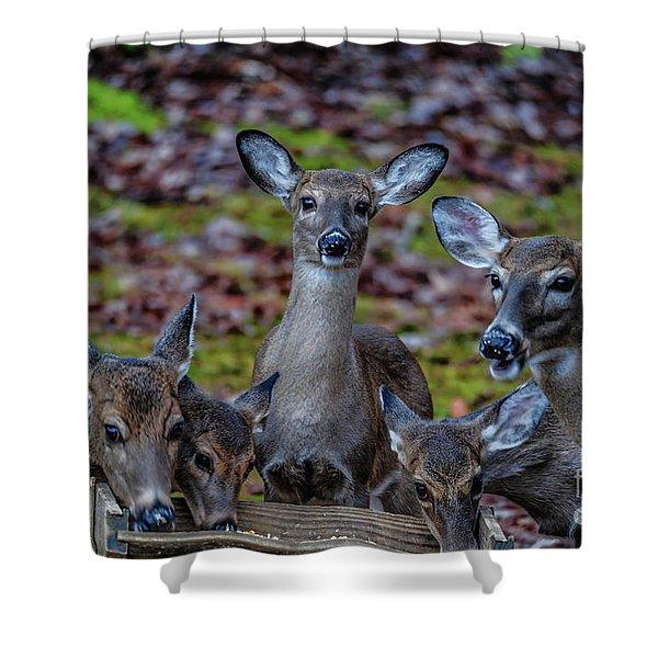 Deer Gathering Shower Curtain