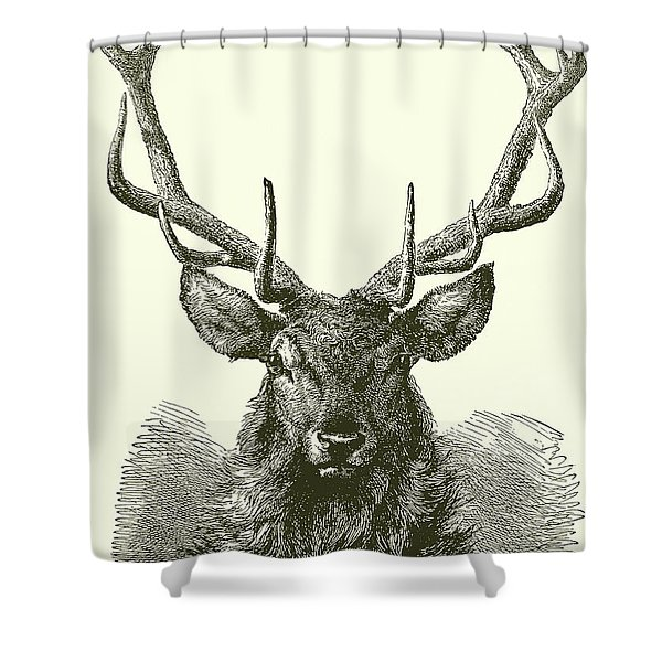 Deer Head With Mature Antlers Shower Curtain