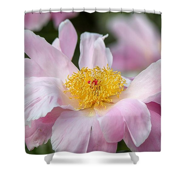Delicate Pink Peony Shower Curtain