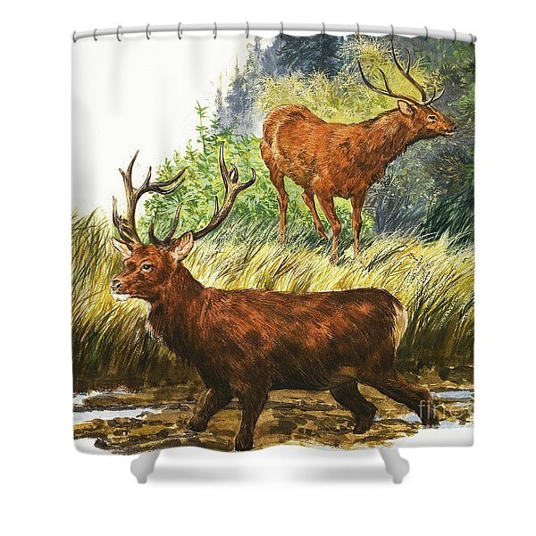 Depiction Of Two Red Deer Shower Curtain
