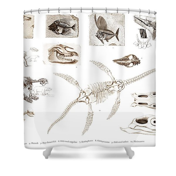 Different Types Of Ancient Fossils Illustrated By Charles Dessalines D' Orbigny  1806-1876 2 Shower Curtain