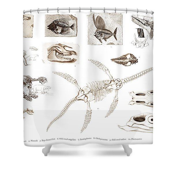 Different Types Of Ancient Fossils Illustrated By Charles Dessalines D' Orbigny  1806-1876  Shower Curtain