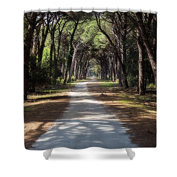 Dirt Pathway In A Mediterranean Pine Forest Shower Curtain
