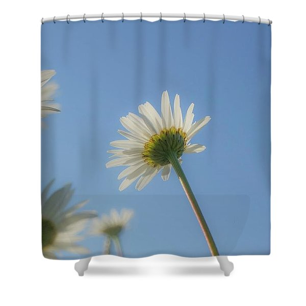Distracted Daisies Shower Curtain