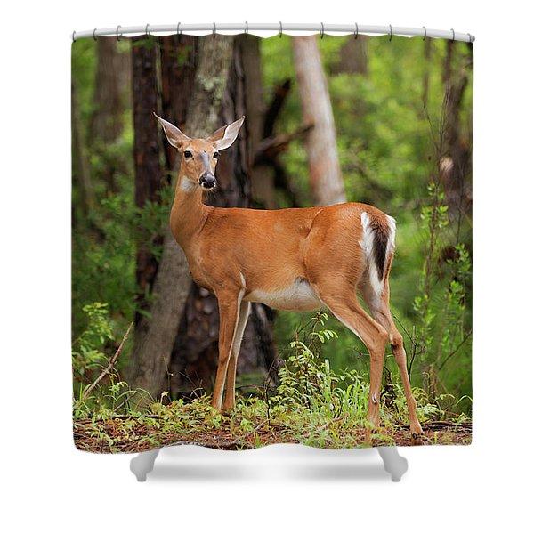 Doe, A Deer, A Female Deer Shower Curtain