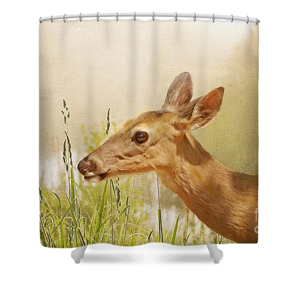 Doe At Dawn Shower Curtain