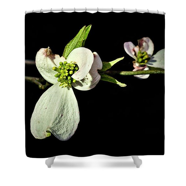 Shower Curtain featuring the photograph Dogwood Tree by Meta Gatschenberger