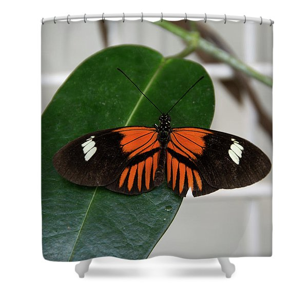 Doris Longwing On Leaf Shower Curtain