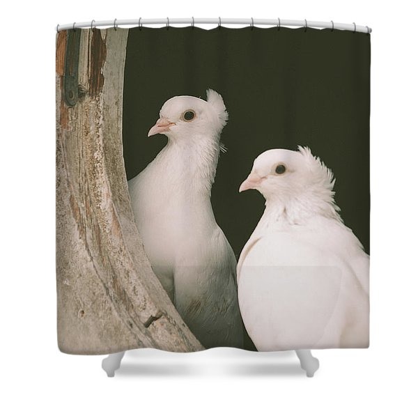 A Pair Of Doves Shower Curtain