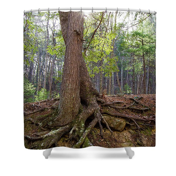 Down In Her Roots Shower Curtain