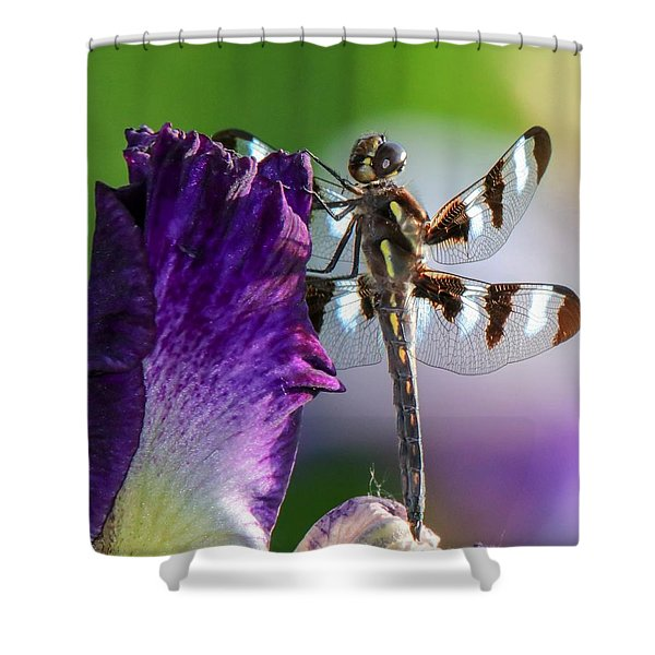 Dragonfly On Iris Shower Curtain