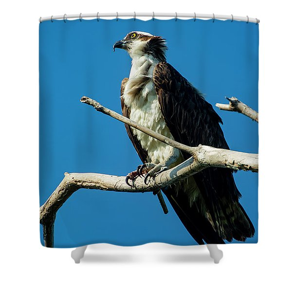 Dreamimg Shower Curtain