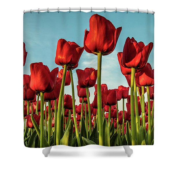 Shower Curtain featuring the photograph Dutch Red Tulip Field. by Anjo Ten Kate