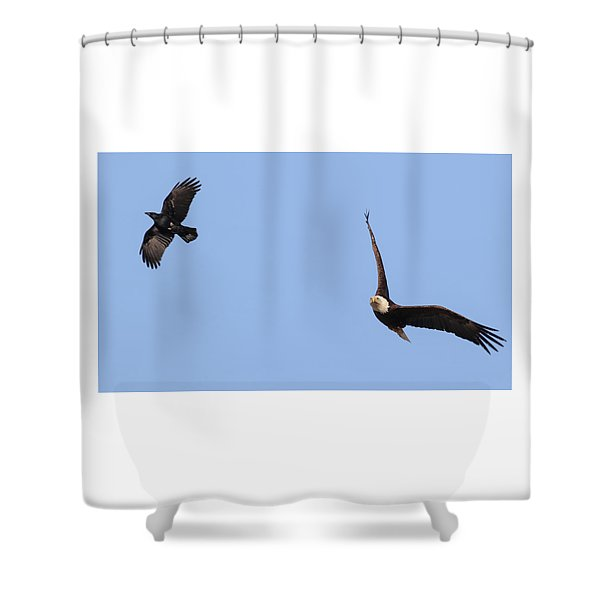 Eagle And Crow  Shower Curtain