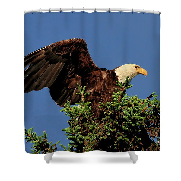 Eagle In Treetop Shower Curtain