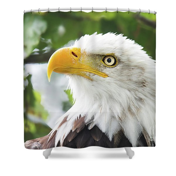 Bald Eagle Perched In A Tree Shower Curtain