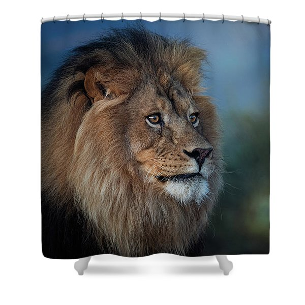 Early Morning Lion Portrait Shower Curtain