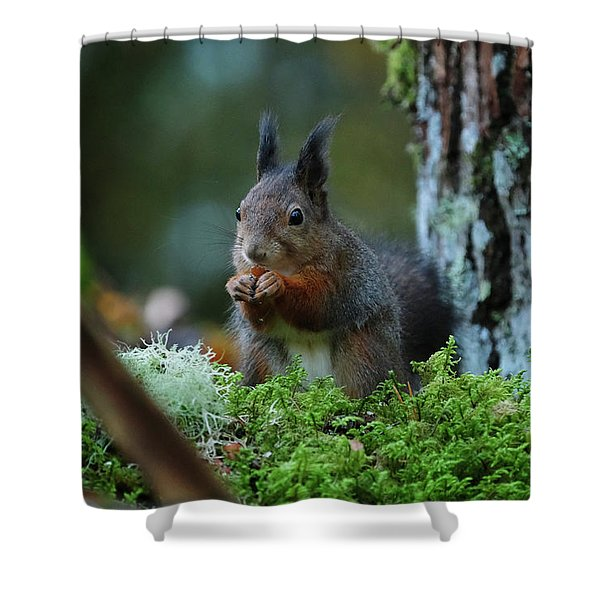 Eating Squirrel Shower Curtain