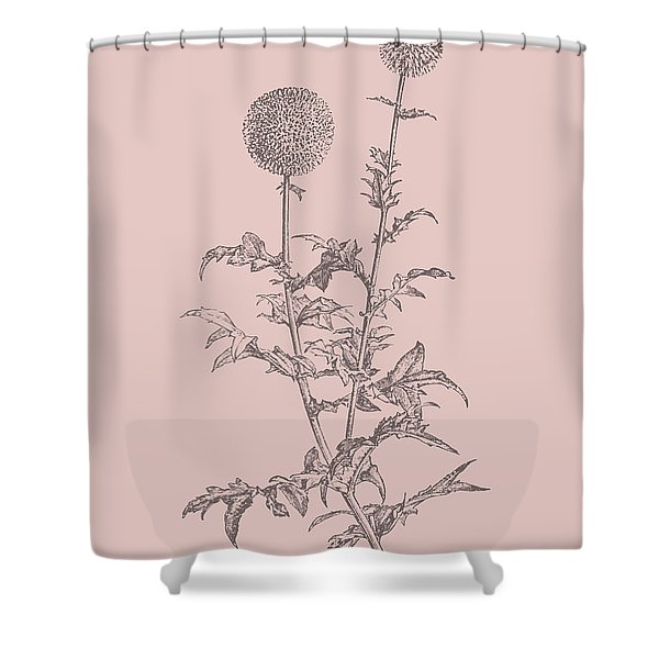 Echinopos Blush Pink Flower Shower Curtain