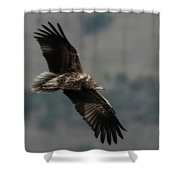 Egyptian Vulture, Sub-adult Shower Curtain