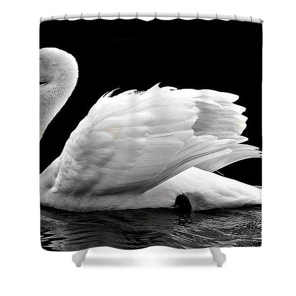 Elegant Swan Shower Curtain