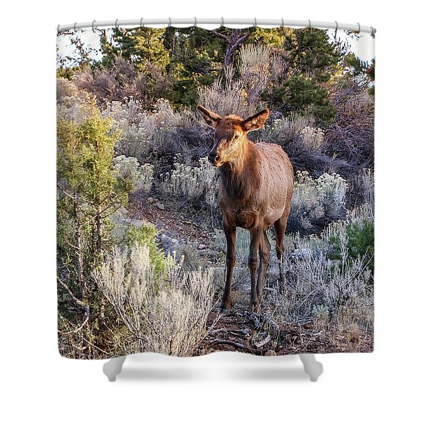 Shower Curtain featuring the photograph Elk Cow 2, Grand Canyon by Dawn Richards