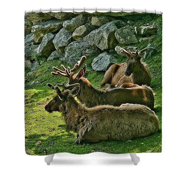 Shower Curtain featuring the photograph Elk by Meta Gatschenberger