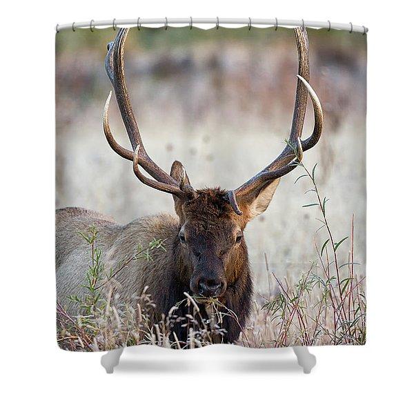 Elk Portrait Shower Curtain