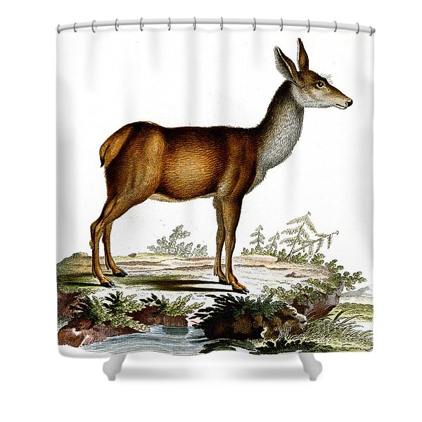Engraving Of A Red Deer  Shower Curtain