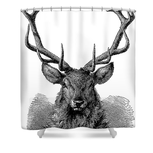 Engraving Of The Head Of A Red Deer, In Which The Antler Is Fully Developed  Shower Curtain