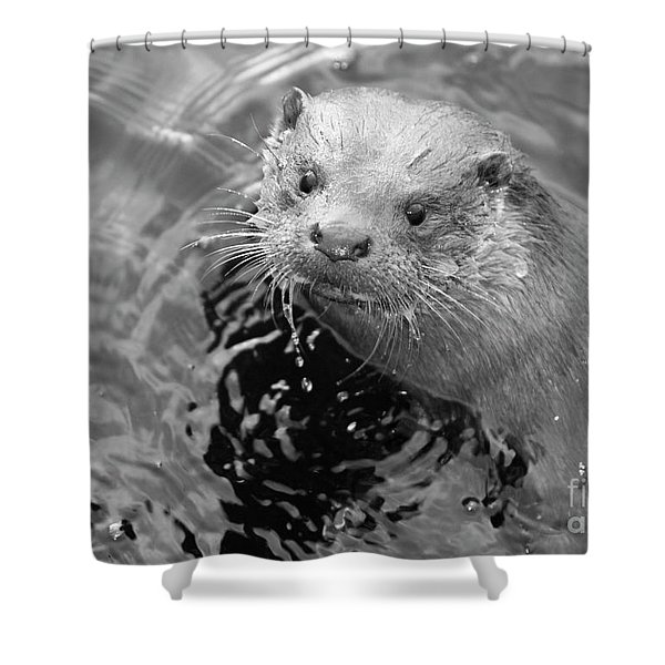 European Otter Shower Curtain