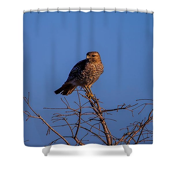 Evening Look Out Shower Curtain