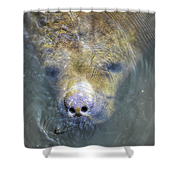Face Of The Manatee Shower Curtain