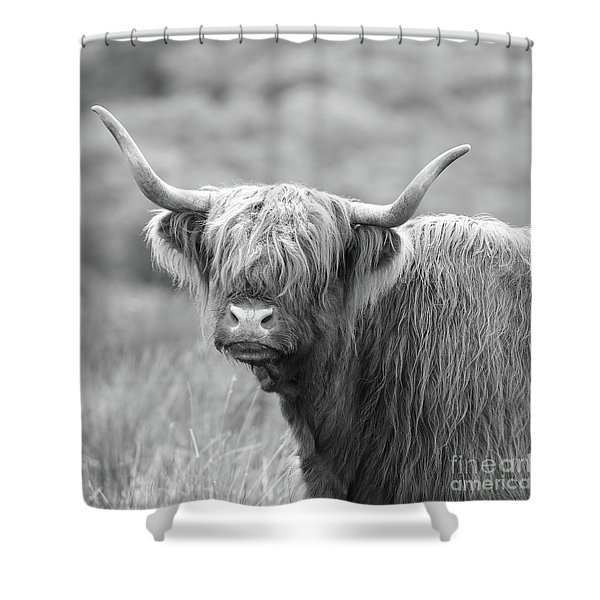 Face-to-face With A Highland Cow - Black And White Shower Curtain