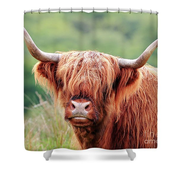 Face-to-face With A Highland Cow Shower Curtain