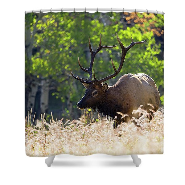 Fall Color Rocky Mountain Bull Elk Shower Curtain