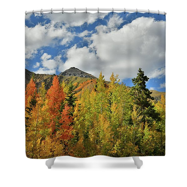 Fall Colored Aspens Bask In Sun At Red Mountain Pass Shower Curtain