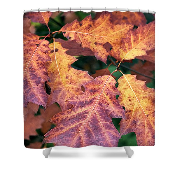 Shower Curtain featuring the photograph Fall Flames by Whitney Goodey