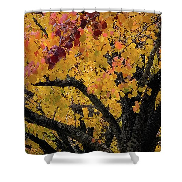 Fall In Carlyle Shower Curtain