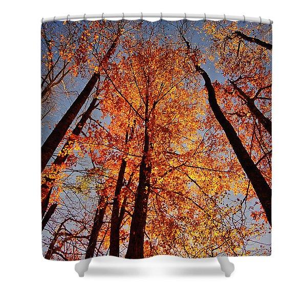 Fall Trees Sky Shower Curtain
