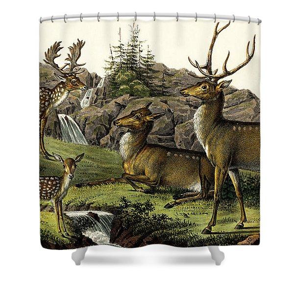 Fallow Deer, 1824 Shower Curtain
