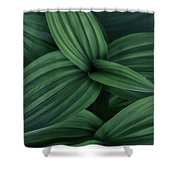 False Hellebore Plant Abstract Shower Curtain
