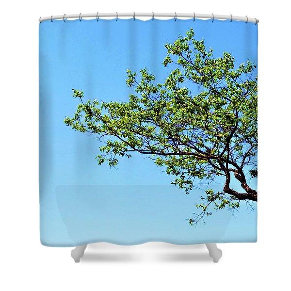 Far Reaching Shower Curtain