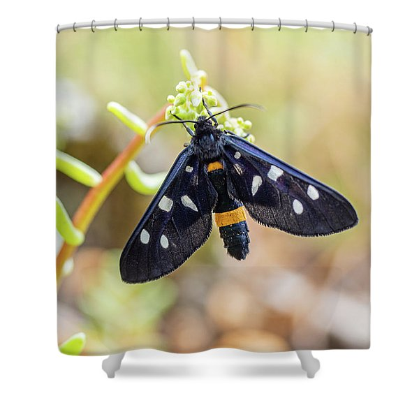 Fegea - Amata Phegea -black Insect With White Spots And Yellow Details Shower Curtain
